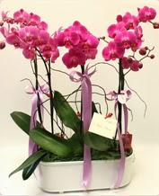 Beyaz seramik içerisinde 4 dallı orkide  Tekirdağ çiçekçi mağazası
