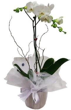 Tek dallı beyaz orkide  Tekirdağ uluslararası çiçek gönderme