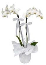 2 dallı beyaz orkide  Tekirdağ online çiçekçi , çiçek siparişi