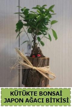 Kütük içerisinde doğal bonsai ağacı  Tekirdağ çiçek , çiçekçi , çiçekçilik