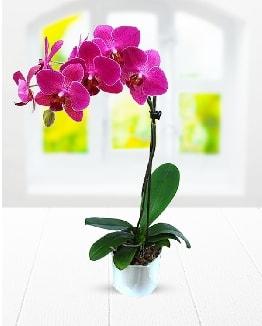 Tek dallı mor orkide  Tekirdağ ucuz çiçek gönder