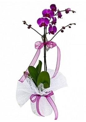 Tekli Mor Orkide  Tekirdağ çiçekçi telefonları