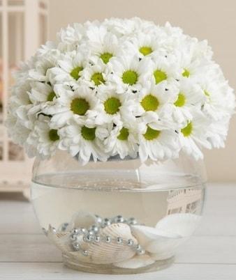 Fanusta beyaz Papatya  Tekirdağ ucuz çiçek gönder
